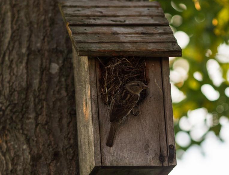 Bird House_pSp